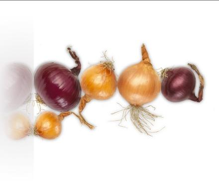 OG-Onions rotate